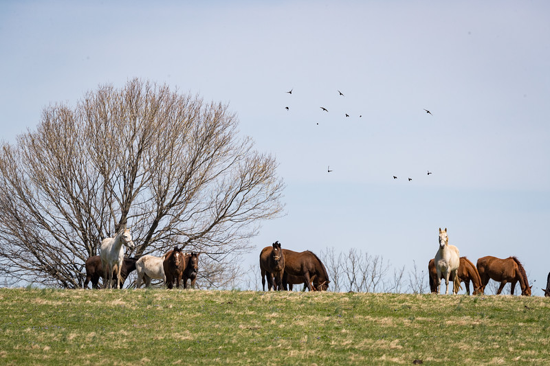 Mereworth Farm 4.16.19