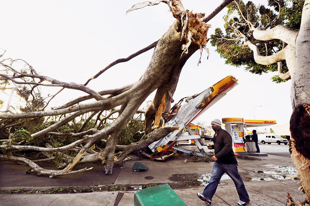 . A fallen tree that fell due to the high winds that destroyed the Shell Station on Colorado Boulevard and San Gabriel Boulevard in Pasadena Thursday, December 1, 2011. (SGVN/Staff Photo by Walt Mancini/SXCity)
