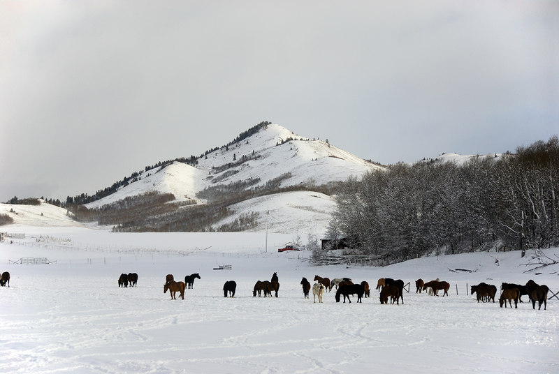 Horses and mountains   (Dec 14, 2006, 09:16am)  Taken from a moving bus on the way to Jackson Hole airport..