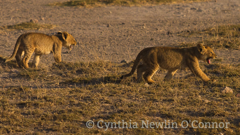 cat fight and more - 8.jpg
