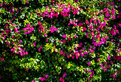 Belize on Spring Break - File 1