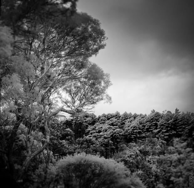 Te Aro Trees