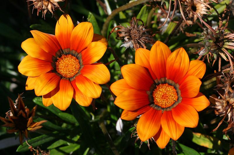 2353 Flowers.jpg