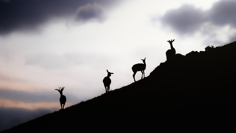 Elk Sunset Site.jpg