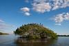 9032 Seabird rookery in the Ten Thousand Islands