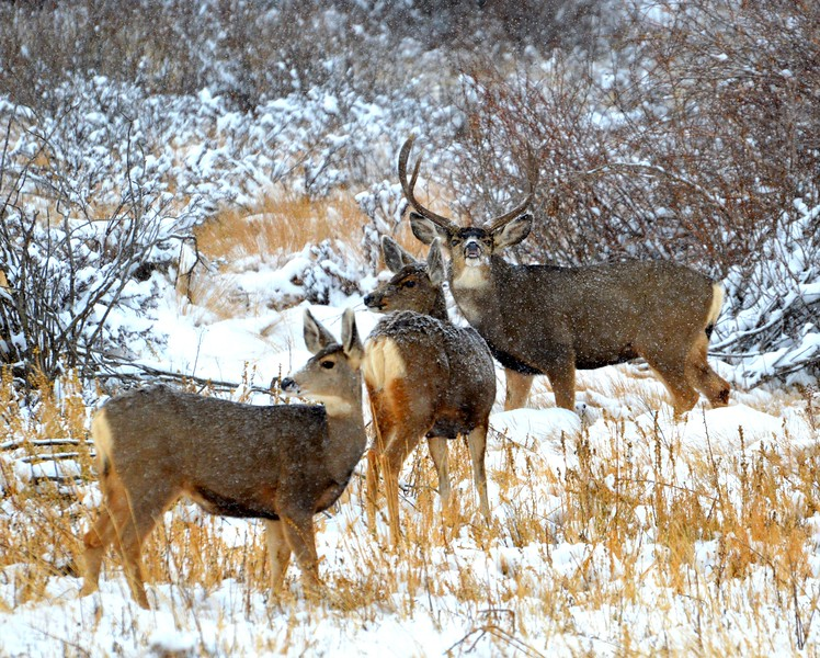 Family gathering...love how the buck is curling that lip up!