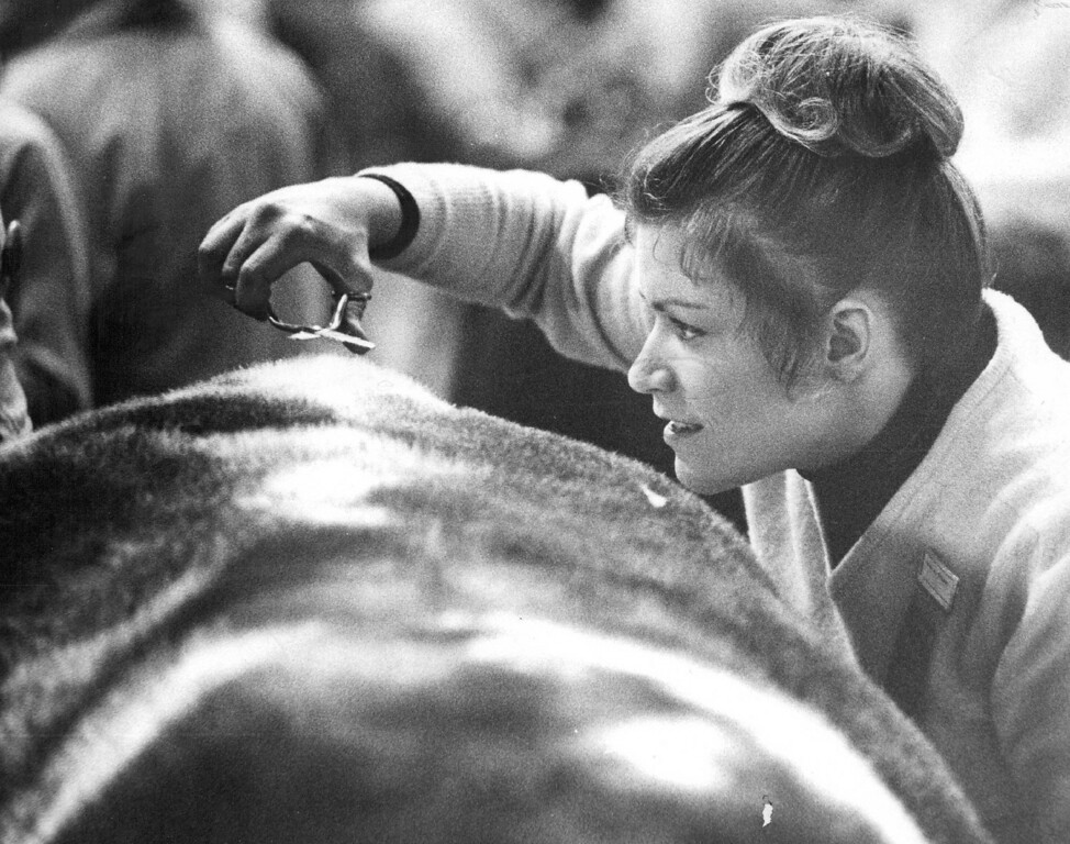 . National Western Stock Show  Mrs. Carol Thieman, of Concordia, Mo. trims the hair on her steer. Ed Maker, The Denver Post  Credit: Denver Post, Inc.