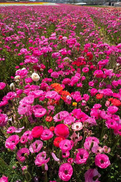 Spring Flowers A-184.jpg