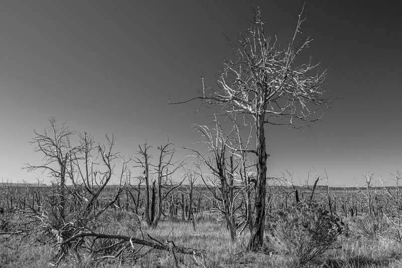 ©2020 Dennis A. Mook; All Rights Reserved; Tree Project-019002.jpg