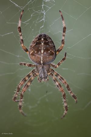 Spider, Cross