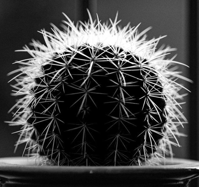 cactus 110619-0379.jpg