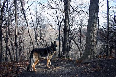 Taylor Creek November 2010