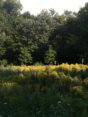 2012-08-28 Meadow & Veggie Garden