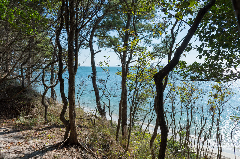 Chesapeake overlook from Kiptopeke State Park