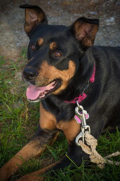 Stephanie Runion doggie-7.jpg