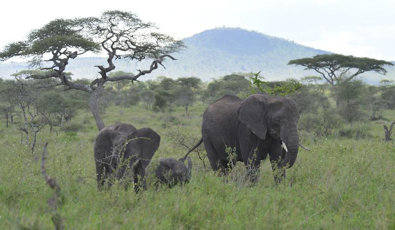 East Africa Safari 348.jpg