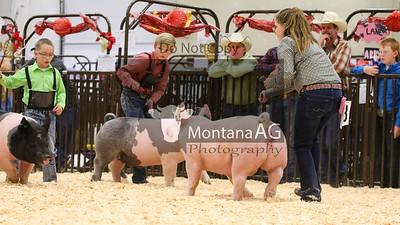 Open Swine