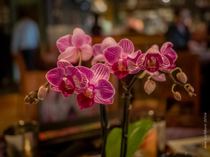 Bhima's Warung Restaurant