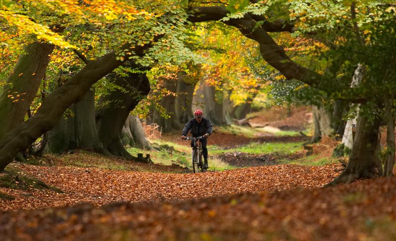 262 Ashridge - Cyclist - 9229.jpg