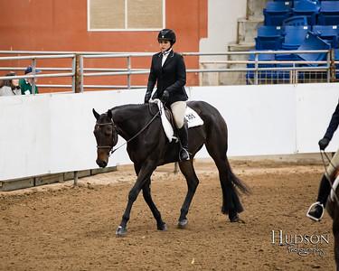 62 Breed Type Hunter Under Saddle Horses Sr