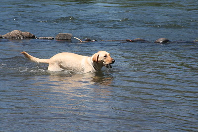 20060805 Swimming In The Willamette