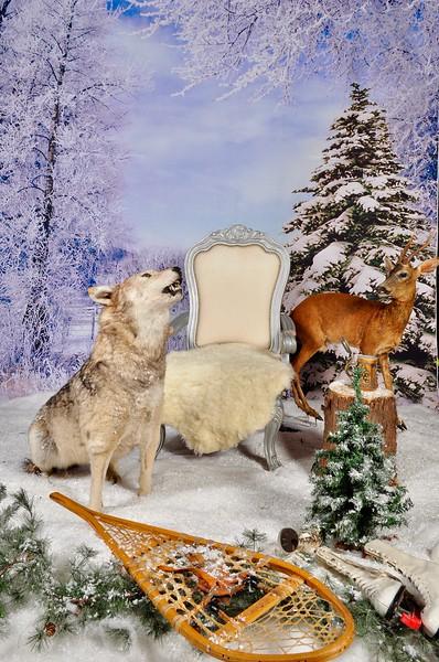 phototheatre-christmas wolf-01.jpg