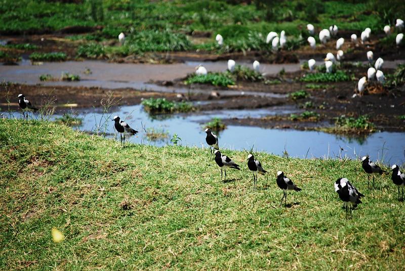 Ngorongoro (179).JPG