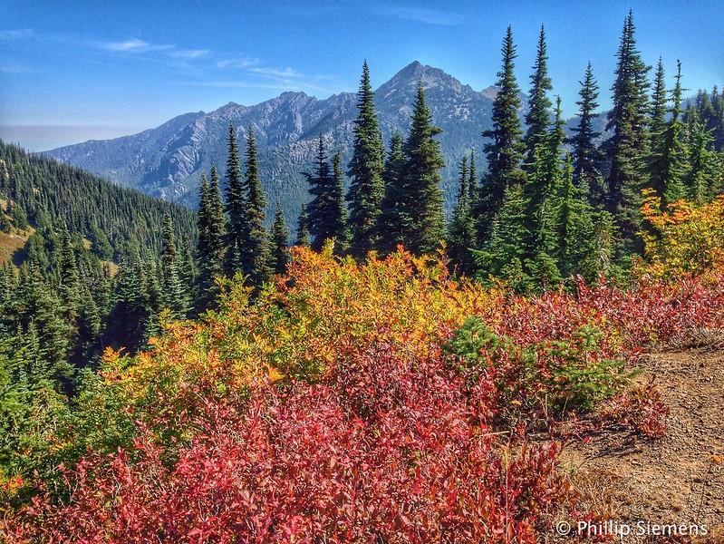 Some fall color on Hurricane Ridge