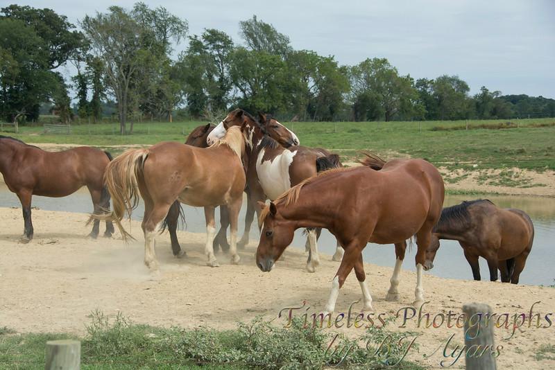 2014_Horses_Woodstown_16.jpg