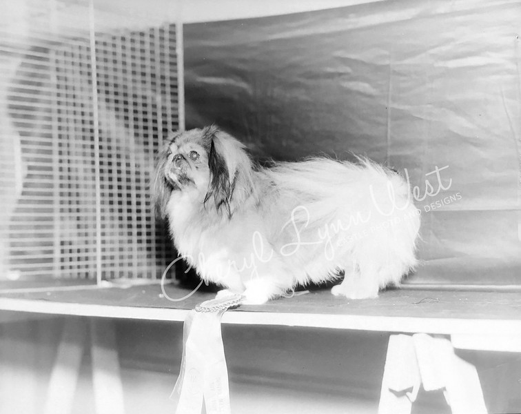 Pekingese 1932 - 2-WM.jpg