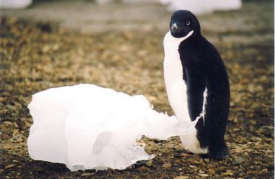 Antarctic Travel