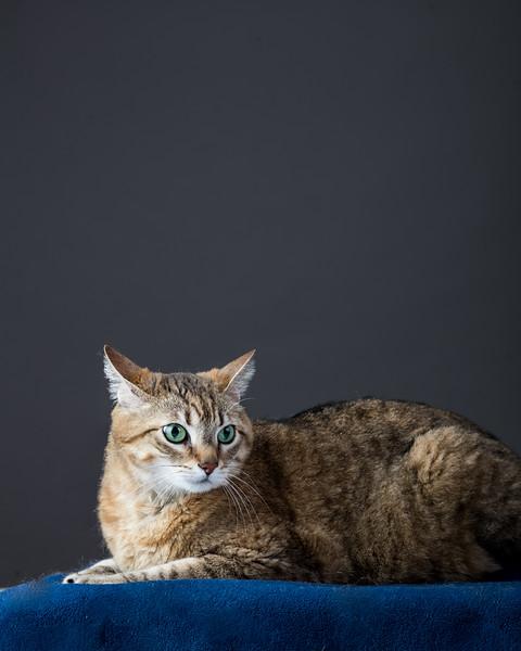 19_0712_cats_ww-.jpg