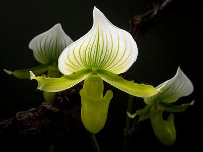 Foto workshop orchideje s Ondřejem Prosickým