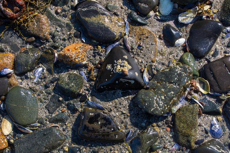 Rocks-beach-seaweed3.jpg