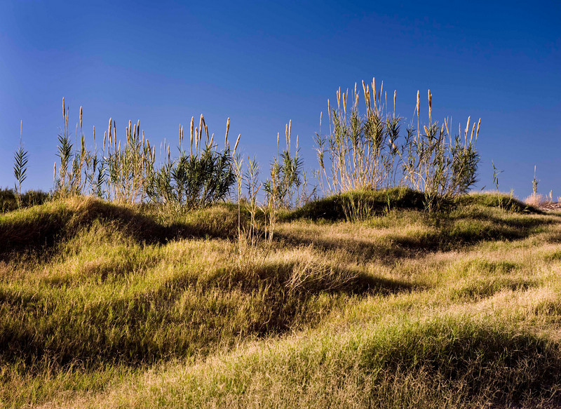 Dune grasses - Boquillas Canyon