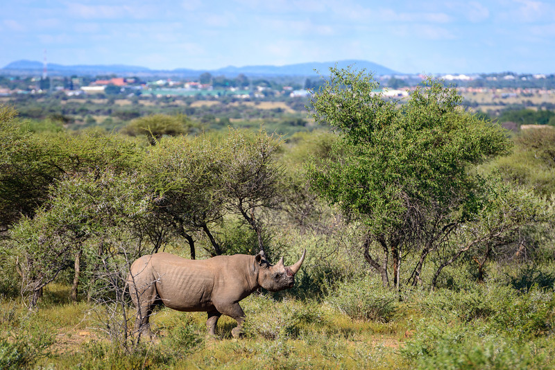 Pilanesberg-20130217-0624