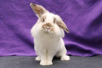 Adoption Rabbits-12-21-22-19