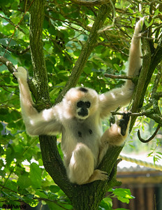 20140611 - Zoo Parc Overloon