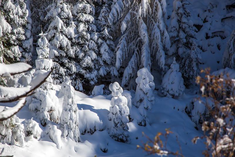 Rheinwald-Winter-D-Aebli-083.jpg