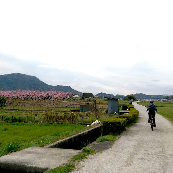Would you like to go biking through Japan? Then try the lovely Kibji Trail for a fun travel adventure.