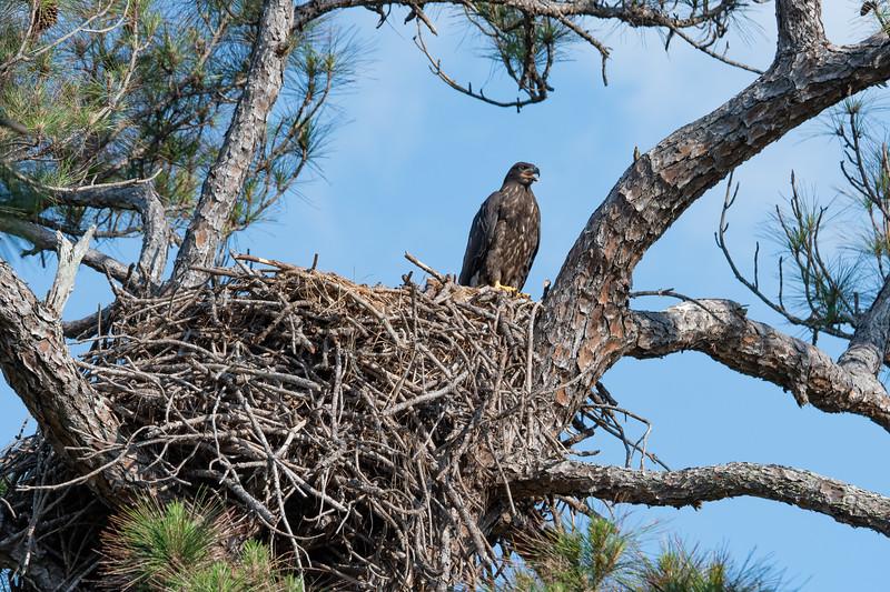 BE27 Eagle's Nest In Melbourne, FL - April 9, 2020