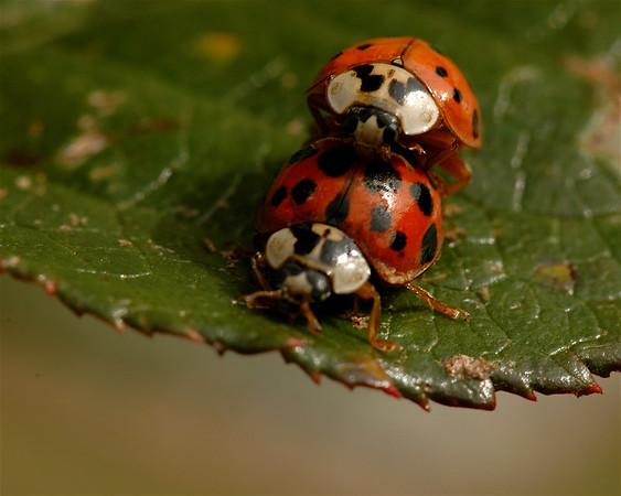 Lady & Bugs