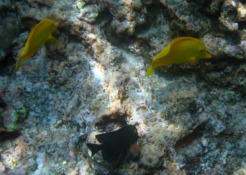 432- 20080416- Hawaii 20-Snorkelling IMG_0598.jpg