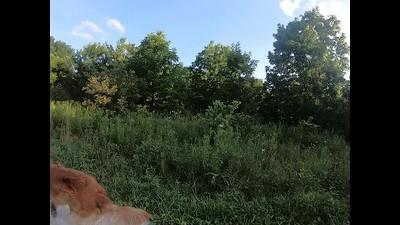 Archie Dog Park 072520