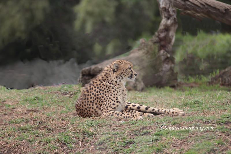 San diego wild animal park (1)