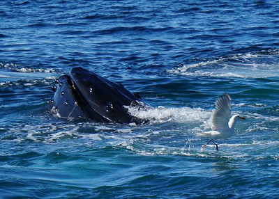 2014 06 22 Whale Watching