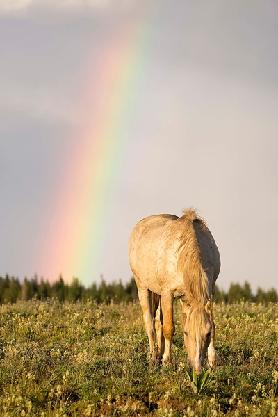 Pryor Mtn Wild Mustangs_Cloud under rainbow3 8x10.jpg
