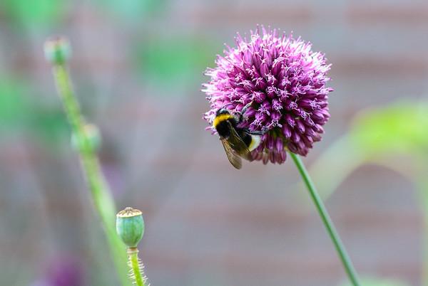 Bijen 2021