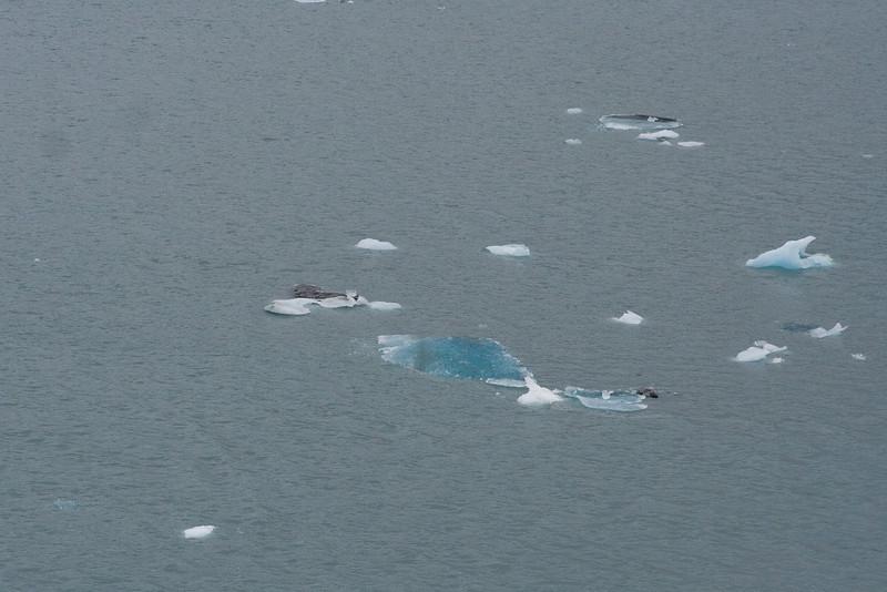 Icebergs 1.jpg