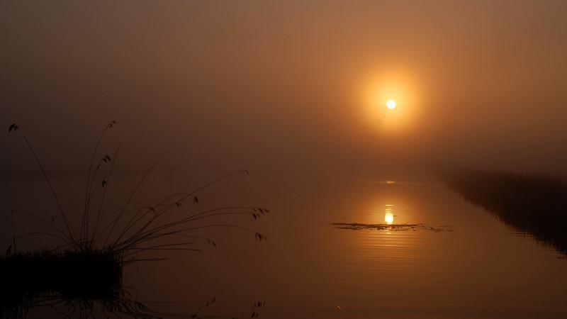 Mist. Ilperveld, The Netherlands.